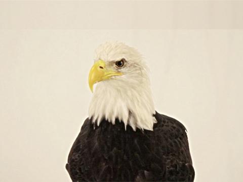Eagle Drum by Rebecca Belmore. Image courtesy MASS MoCA.