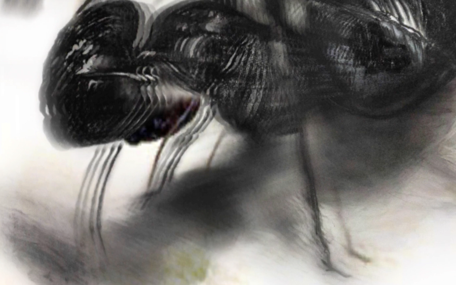 "Screen capture from ""One for Sorrow"" environment. White ground with a hazy charcoal drawing of a wasp."
