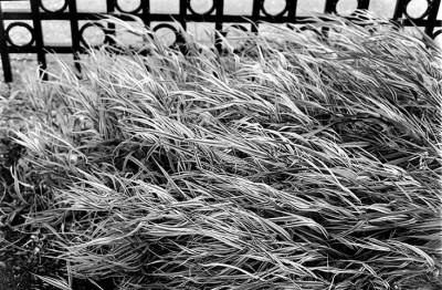 Black and white close up photo of grass