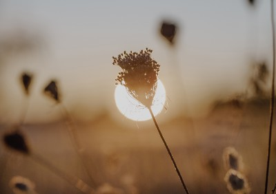 Image of plant in front of sun in distance