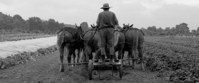Image of workhorses and driver from behind