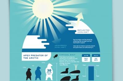 Polar Bear Infographic