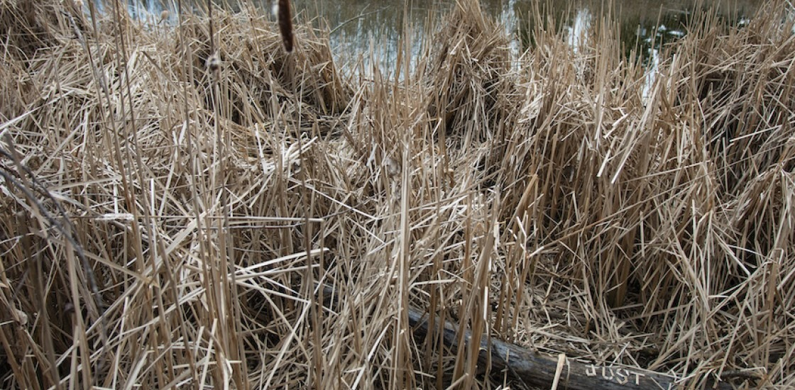An image of reeds with a log in the bottom right corner with the word Just scratched into it.