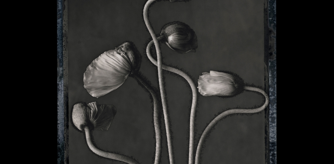Black and white image of flowers