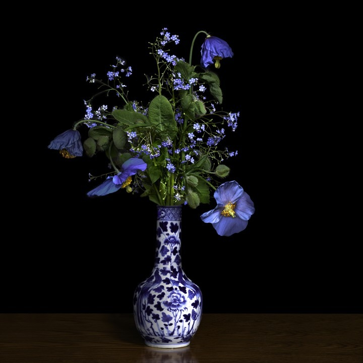 Image: T.M. Glass, Blue Poppy in a Blue and White Chinese Vase, 2018, archival pigment ink on archival cotton rag paper fused to
