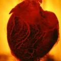 Image of 'Human Heart' by Floria Sigismondi, 2016