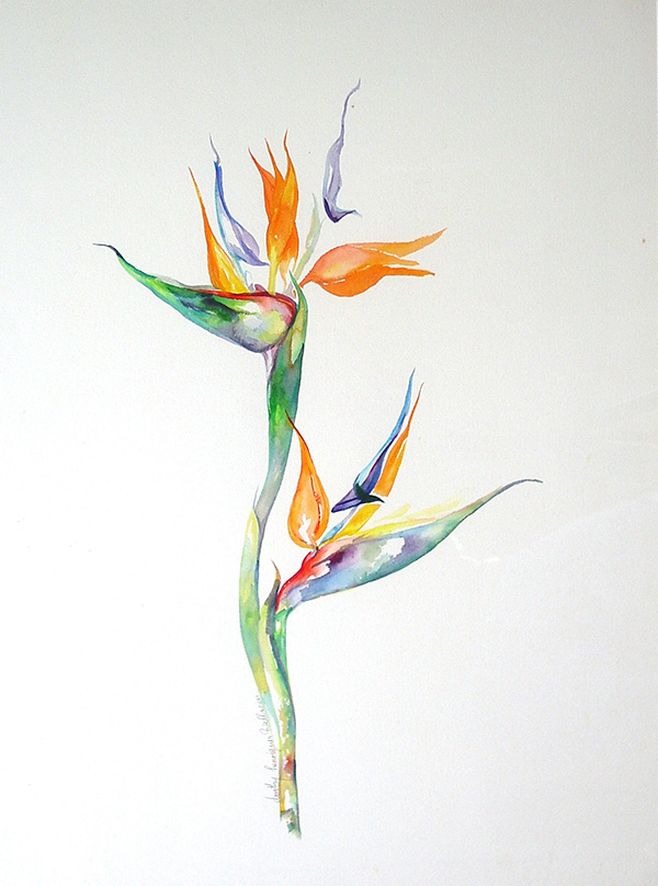 watercolour of a bird of paradise flower, untitled