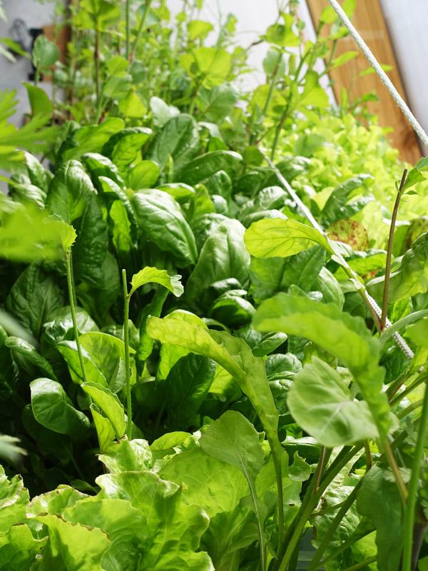 Image of green plants growing indoors