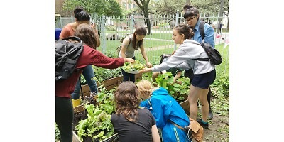 grOCAD members harvesting greens for Salad Day 2017
