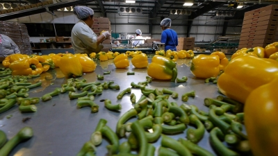 photo of workers working with vegetables