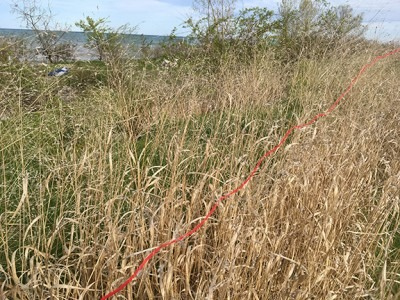 photo of a field with a red line superimposed