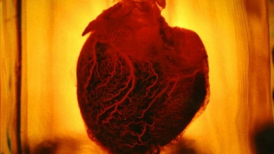 Image of 'Human Heart' by Floria Sigismondi, 2016