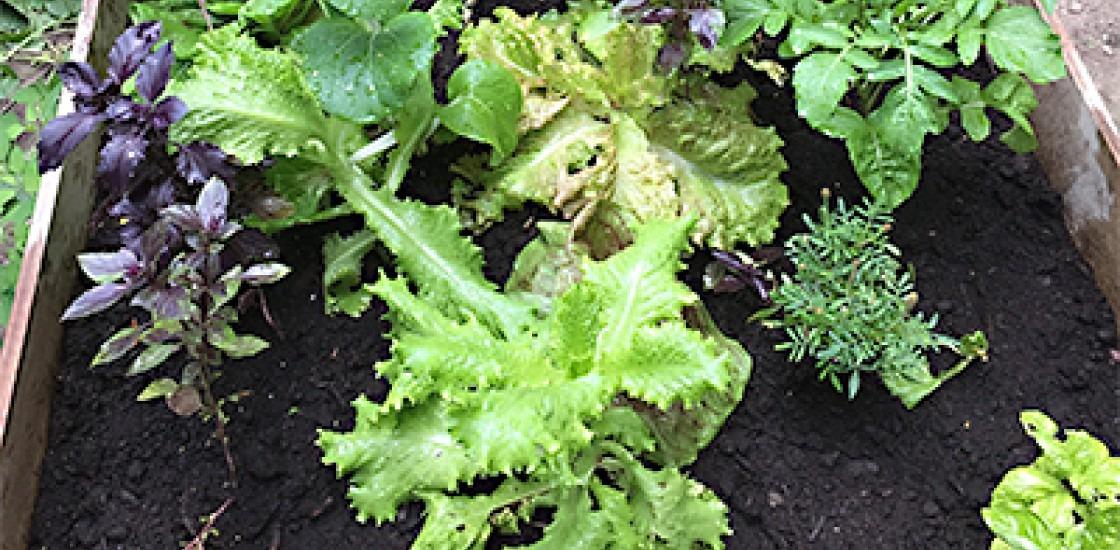grOCAD Community Garden