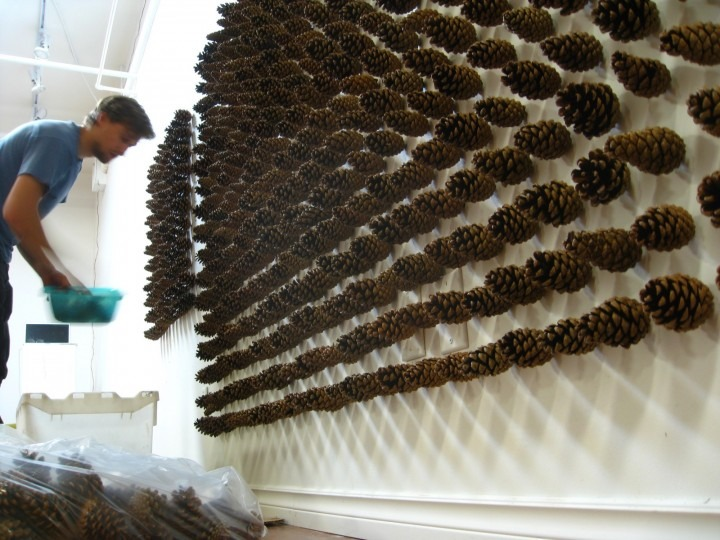 image of an installation artwork involving pine cones