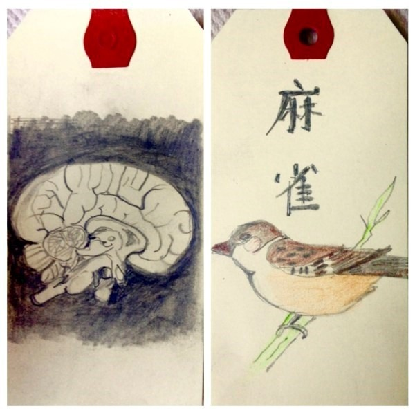 illustrations of a bird and a brain